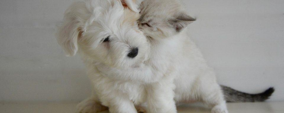 Kitten kissing a puppy, Cute!