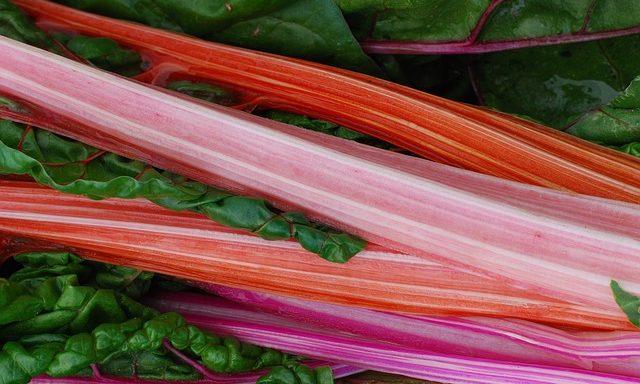 Bundle of rhubarb, rhubarb, rhubarb